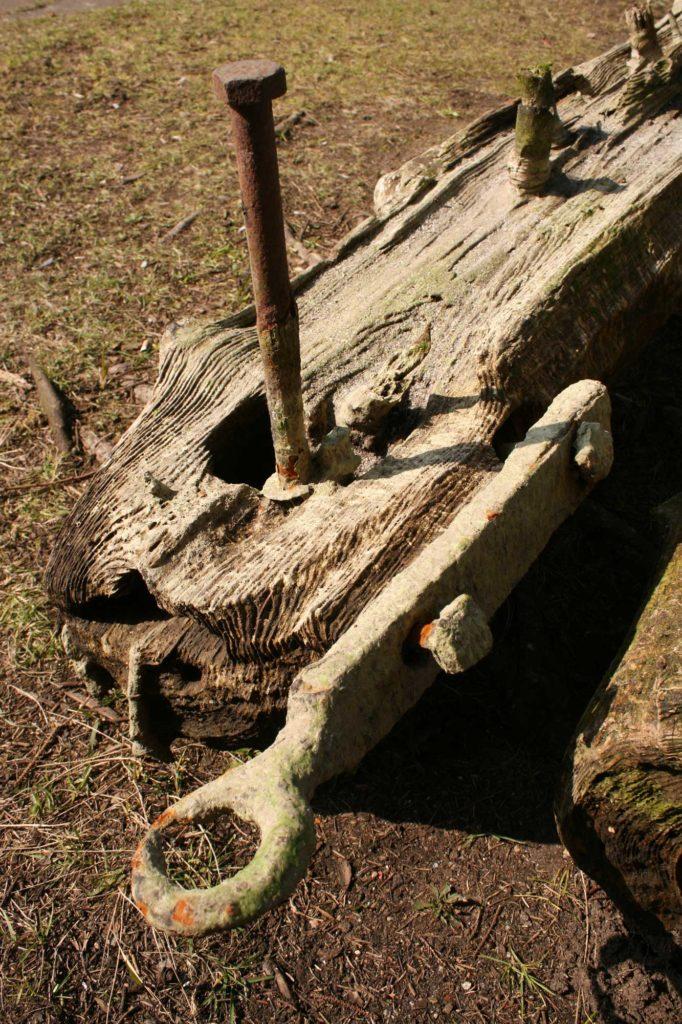 Baum-Schraube