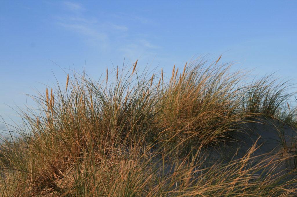Nordsee Duenenhuegel - Ralf Struß