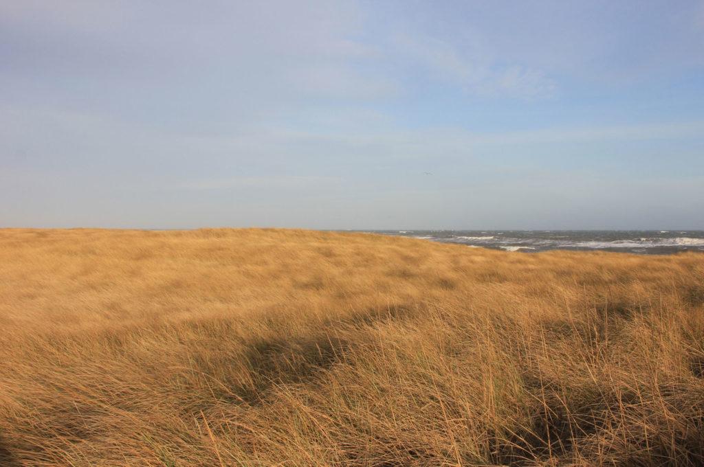 Nordsee Düne - Ralf Struß